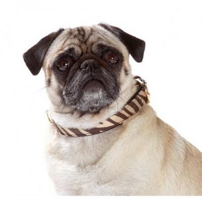 collier-fantaisie-pour-chien-motif-zebre